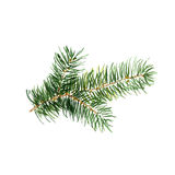 The branch of fir tree on white background, watercolor illustration. In hand-drawn style Stock Photography