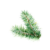 The branch of fir tree on white background, watercolor illustration. In hand-drawn style Royalty Free Stock Image