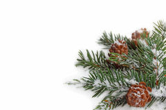 Branch of fir tree on white snow. Stock Image