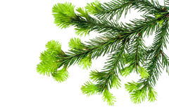 Branch of Fir on white. Branch of Fir isolated on white useful for prints decorations Stock Photo