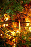 Branch On Fire. Branches on a campfire Royalty Free Stock Photography