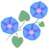 Branch of flower Ipomoea, morning glory. Vector illustration Royalty Free Stock Photos