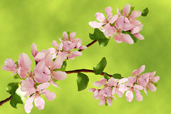 Branch of flower Royalty Free Stock Photography