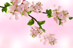 Branch of flower Royalty Free Stock Images