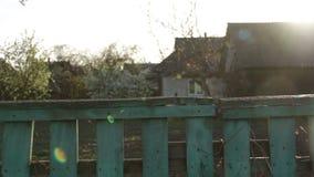 Branch flower village stock video