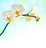 Branch of flowering orchids stock photography