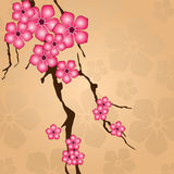 Branch with flowers Royalty Free Stock Images