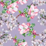 Branch Flowers Apple and Cherry. Handiwork Watercolor Seamless Pattern on a Blue Background. Apple Cherry Tree Flowers Watercolor Floral Seamless Pattern Royalty Free Stock Images