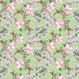 Branch Flowers Apple and Cherry. Handiwork Watercolor Seamless Pattern on a Green Background. Apple Cherry Tree Flowers Watercolor Floral Seamless Pattern Stock Photography
