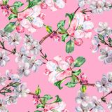 Branch Flowers Apple and Cherry. Handiwork Watercolor Seamless Pattern on a Pink Background. Apple Cherry Tree Flowers Watercolor Floral Seamless Pattern Royalty Free Stock Images
