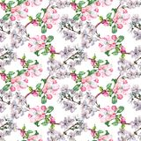 Branch Flowers Apple and Cherry. Handiwork Watercolor Seamless Pattern on a White Background. Apple Cherry Tree Flowers Watercolor Floral Seamless Pattern Stock Photos