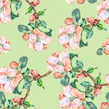 Branch Flowers Apple. Handiwork Watercolor Seamless Pattern on a Green Background. Apple Tree Flowers Watercolor Floral Seamless Pattern Background Branch stock illustration