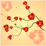 Branch with flowers Stock Photography