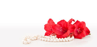 Branch of flowers and necklace. Branch of beautiful flowers and necklace from pearls on a white background Stock Images