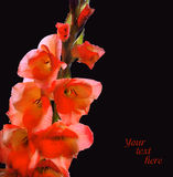 Branch with flowers of red gladiolus, covered with dew Stock Images