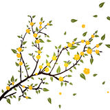 Branch with flowers Royalty Free Stock Image