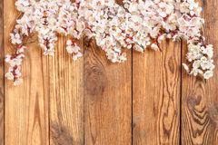 Branch with flowers on wood board. Branch with flowers of an apricot on wood board, for design and your text Stock Photography
