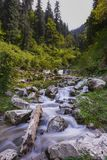 Branch flows on a rocky forest river. stock image