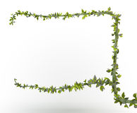Branch frame Royalty Free Stock Image