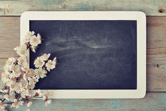 Branch with framed blackboard Stock Photos