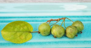 Branch of fresh baby kiwi berries Royalty Free Stock Images