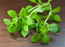 Branch of fresh basil Stock Photography