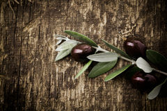 Branch with fresh black olives Stock Images