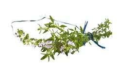 Branch of  fresh blooming thyme, isolated Royalty Free Stock Photos