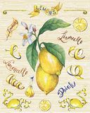Branch of the fresh citrus fruit lemon with green leaves and flowers. royalty free illustration