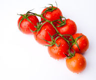 Branch of fresh dewy tomatoes Royalty Free Stock Images