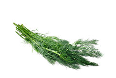 Branch of fresh fennel on a white Royalty Free Stock Photos