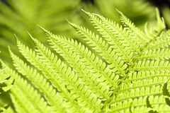 Branch of fresh green fern Stock Photos