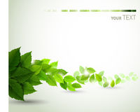 Branch with fresh green leaves. Background Royalty Free Stock Images