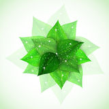 Branch with fresh green leaves sparkles Stock Images