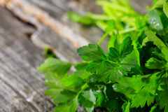 Branch of fresh green parsley Royalty Free Stock Images