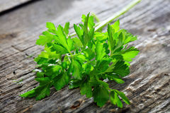 Branch of fresh green parsley Royalty Free Stock Photography