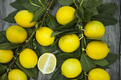 Branch of fresh juicy Sicilian lemons on a wooden background Stock Images