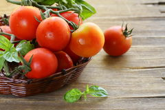 Branch of fresh organic  tomatoes with green basil Stock Photo