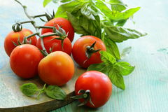 Branch of fresh organic  tomatoes with green basil Stock Photography
