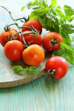 Branch of fresh organic  tomatoes with green basil Royalty Free Stock Photo