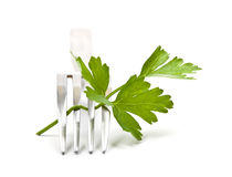 Branch of fresh parsley on the fork Stock Image