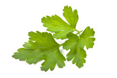 Branch of fresh parsley Stock Images