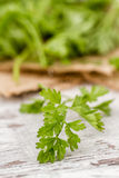 Branch of Fresh Parsley Royalty Free Stock Photography