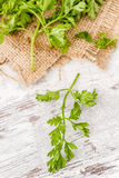 Branch of Fresh Parsley Royalty Free Stock Photo