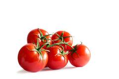 Branch of fresh red tomatoes on isolated white backround Royalty Free Stock Photos