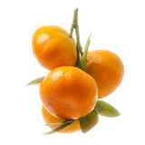 Branch with fresh ripe orange fruits, isolated on white backgrou. Nd stock photography