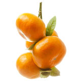Branch with fresh ripe orange fruits, isolated on white backgrou Royalty Free Stock Photography