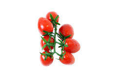 A branch of fresh ripe tomatoes. A branch of fresh ripe red tomatoes Stock Photos