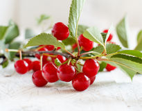 Branch of fresh sour cherries Stock Image