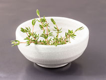 Branch of fresh thyme in the bowl on black stone with selective Stock Photo